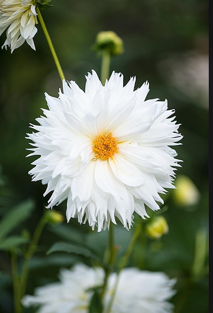 la vierge blanche  ©Cjy
