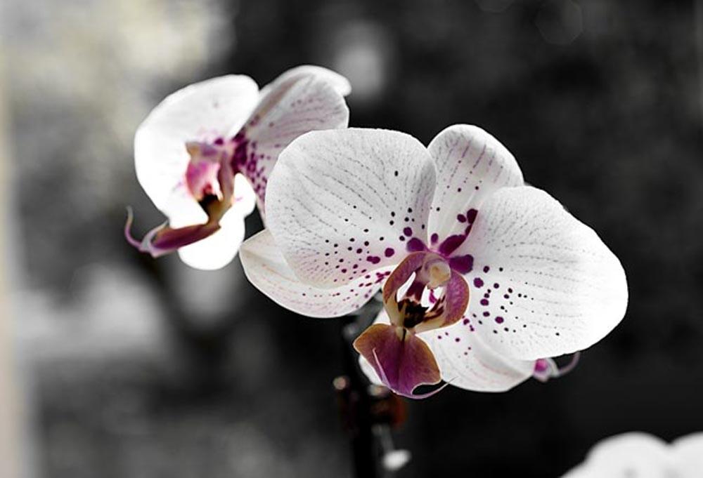 Orchidia @Cjy