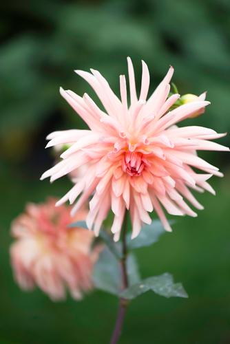 pink @Cjy